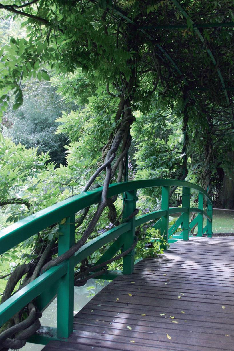 Satavuotiaat sinisateet peittävät japanilaisen sillan lähes kokonaan.