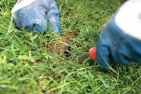 Leikkaa muutamia poikittaisviiltoja saumakohtiin. Se edistää juurtumista.