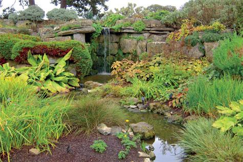 Kivipuutarhassa on sekä kosteassa että kuivassa viihtyviä maanpeitekasveja.