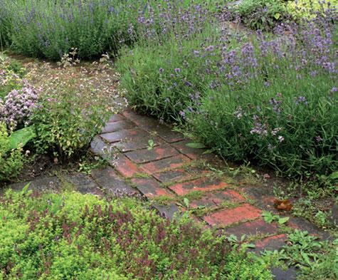 Ajuruoho ja laventeli talvehtivat suhteellisen hyvin.