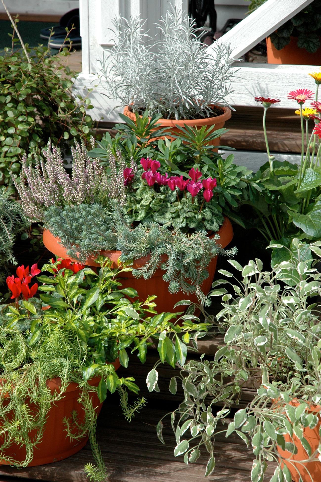 Syyskukkia puutarhaan