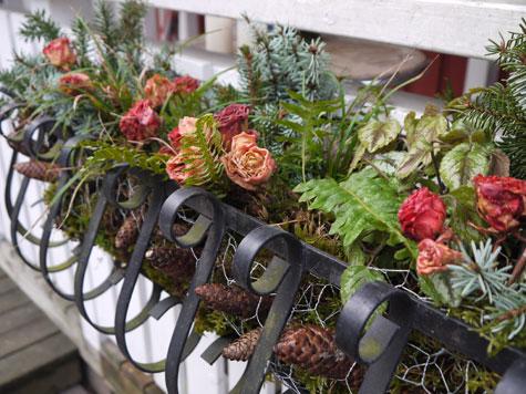 Parvekelaatikko kukkaan talveksi vaharuusujen avulla.