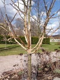 puiden ja pensaiden suojaus verkolla